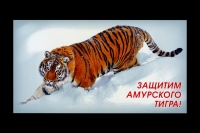 """Россия 2011. Литера """"В"""" 185. Защитим амурского тигра!"""