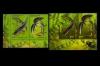 Россия 2012. 1599-1600. Фауна. Тритоны. Совместный выпуск РФ - Беларусь. Оба выпуска. (лнп).